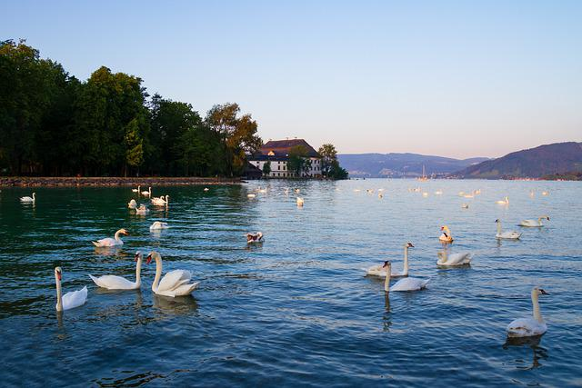 Landscape, Swans, Lake, Castle, Schloss Kammer