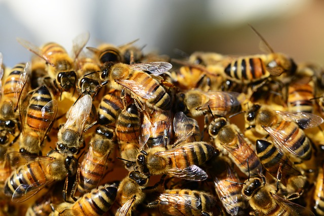 Honey Bees, Beehive, Honey, Bees, Swarm Of Bees