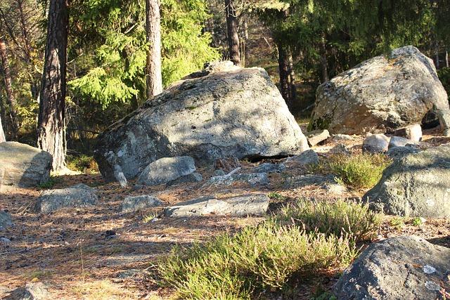 Forest, Stones, Autumn, Swedish Landscape, Nature