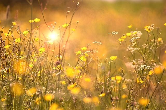 Flowers, Summer, Nature, Plants, Sweden, Swedish Summer