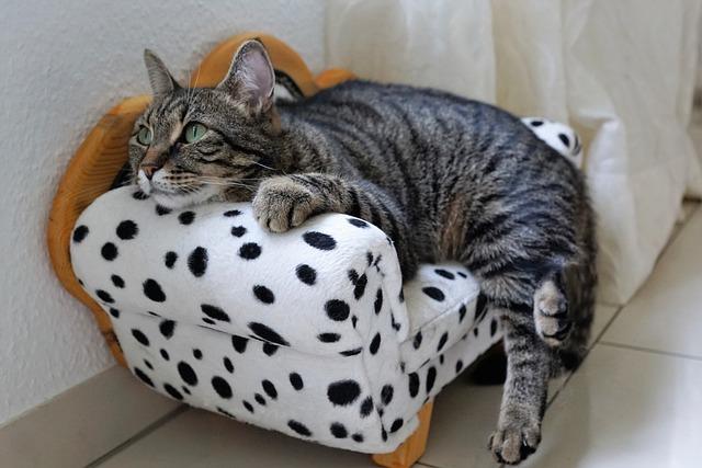 Cat, Sweet, Tiger, Tigerle, Animals, Pet, Young Cat