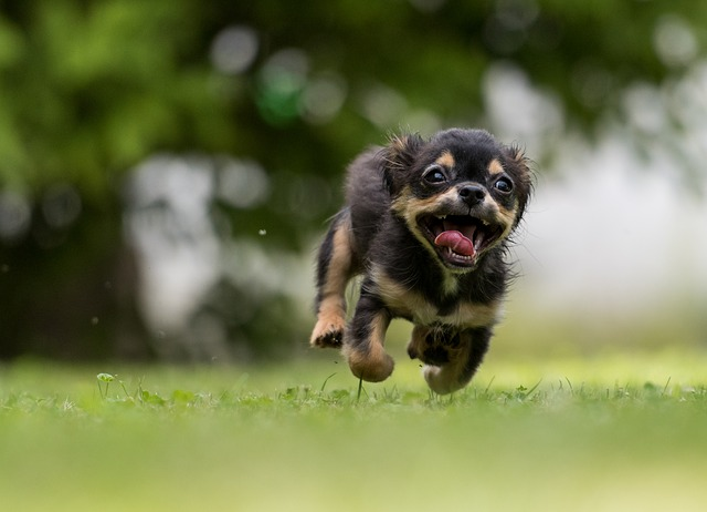 Dog, Action, Sweet, Animal, Dog Plays
