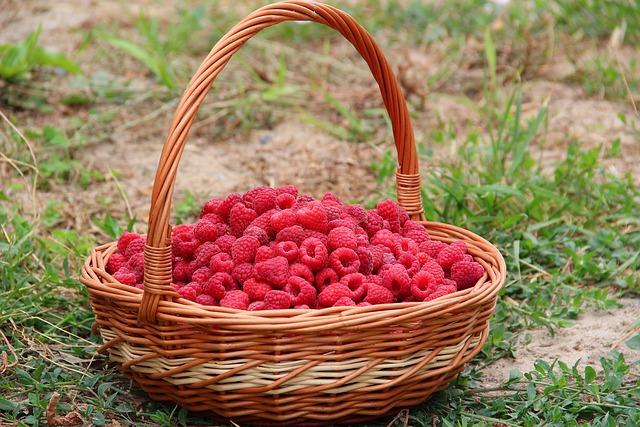 Raspberry, Basket, Berry, Juicy, Summer, Food, Sweet