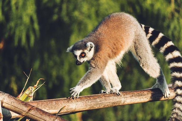 Lemur, Monkey, Animal, Cute, Sweet, Animals, Madagascar