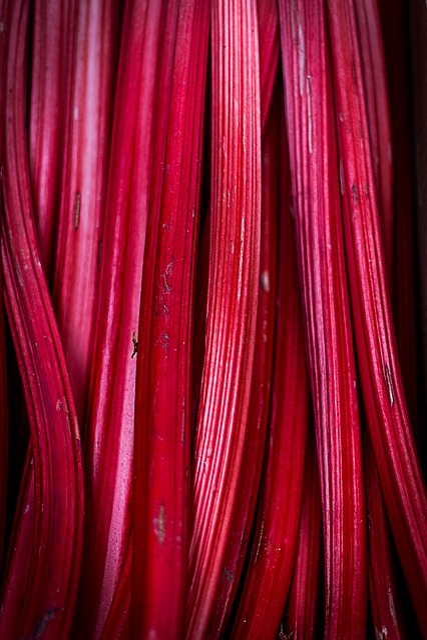 Rhubarb, Fruit, Pink, Red, Fresh, Food, Sweet, Summer