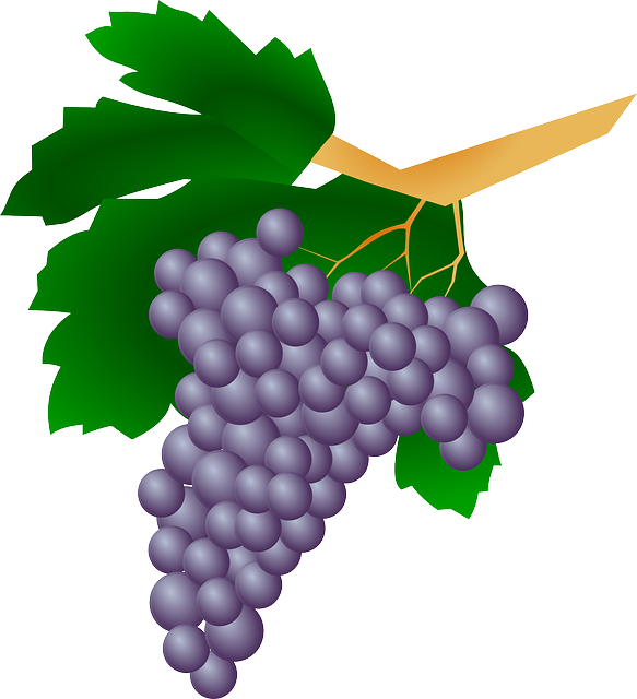 Grapes, Plant, Raisin, Wine, Fruit, Sweet, Berries