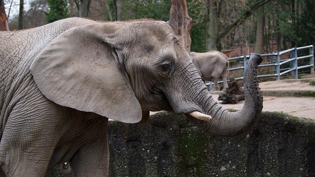 Elephant, Zoo, Wuppertal, Swim, Ice