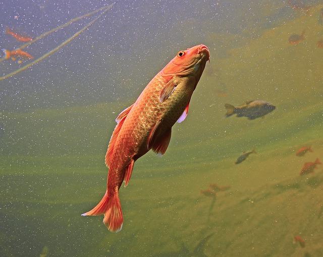 Aquarium, Fish, Orange, Colorful, Swim