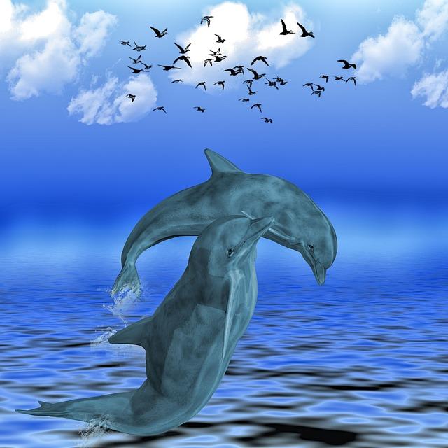 Dolphin, Sea, Meeresbewohner, Dolphins, Animals, Swim
