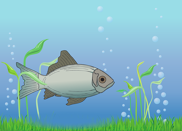 Fish, Water, Water Bubbles, Cod, Swim, Nature, Lake