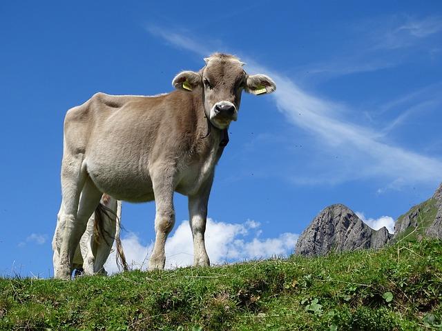 Switzerland, Cow, Alpine, Alm, Cows, Pasture, Nature