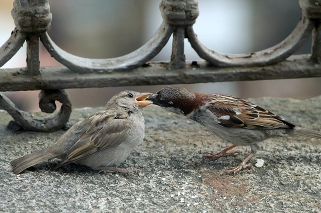 Bird, Imbeccare, Eat, Balcony, Bellinzona, Switzerland