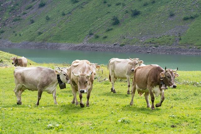 Cows, Pasture, Alpine Pasture, Switzerland