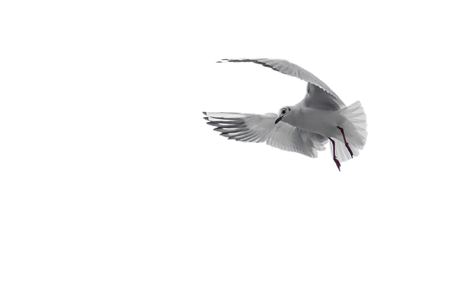 Pigeon, White, Bird, Dove, Nature, Peace, Symbol
