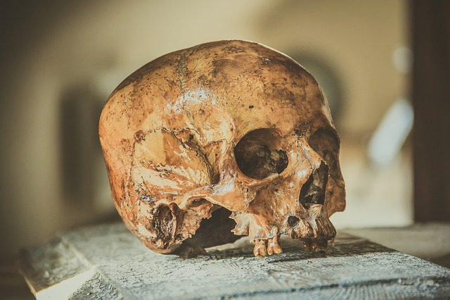Skull, Head, Bone, Symbol, Death, Halloween, Dead