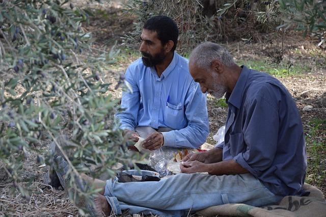 Refugees, Syria, Asylum, Lebanon, Harvest, Olives, Help