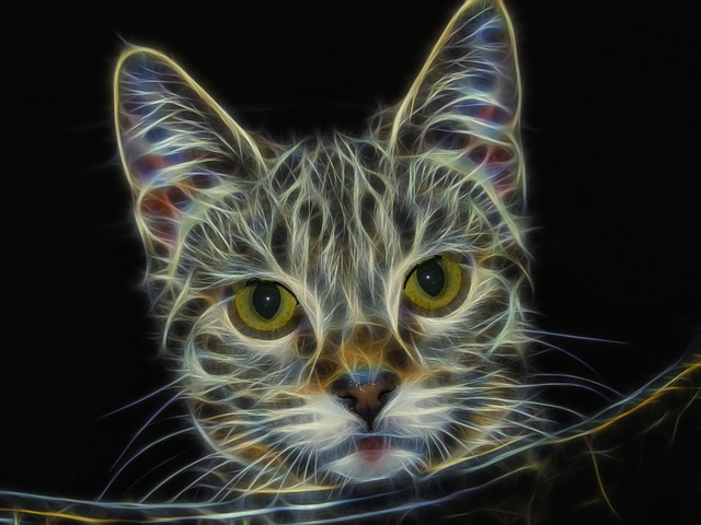 Fractal, Cat, Feline, Portrait, Animal, Tabbed