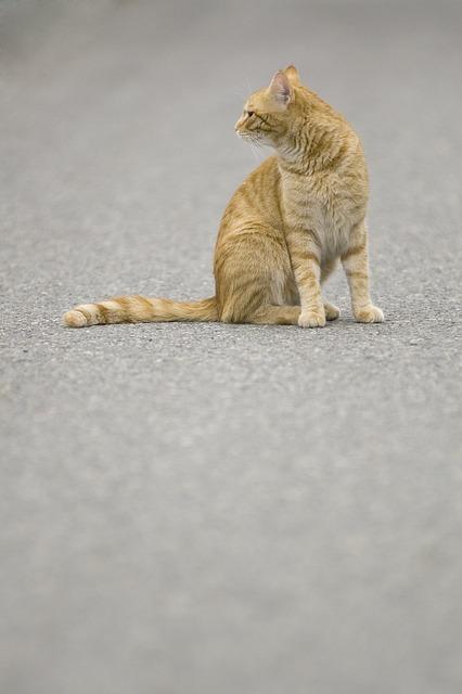 Cat, Tomcat, Pet, Redheaded, Sitting, Tabby, Road