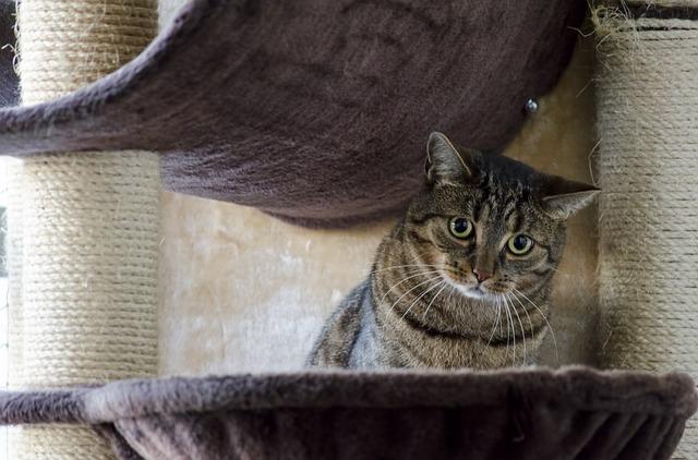 Cat, Kitten, Domestic Cat, Tomcat, Cat's Eyes, Tabby