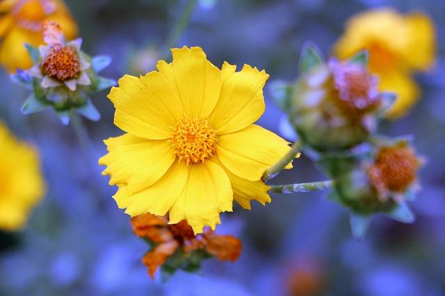 Geumgyeguk, Plants, Flowers, Nature, Tabitha, June