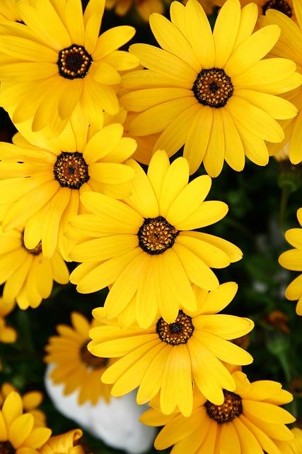 Tabitha, Nature, Plants, Flowers, Yellow Flower