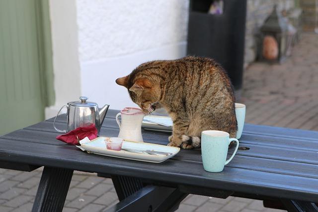 Ireland, Cat, Coffee, Tee, Table