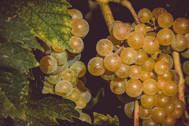 Grapes, Fruit, Table Grapes, Healthy, Grapevine, Vine