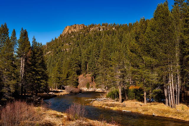 Truckee River, Tahoe National Forest, Trees, Woods