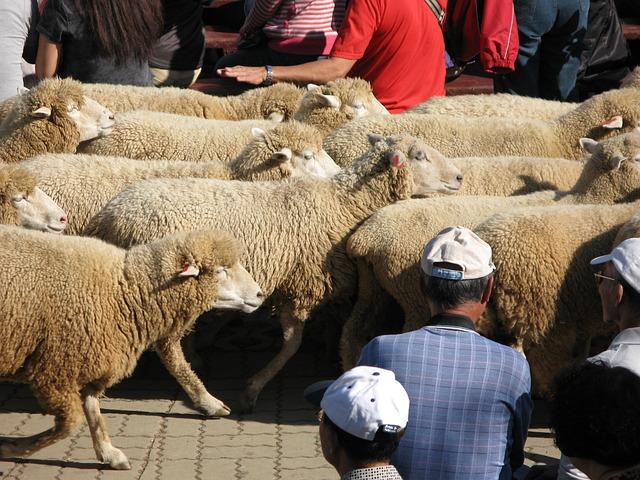 Taiwan, Tai Chung, Farm Ching King, Sheep Show, Travel