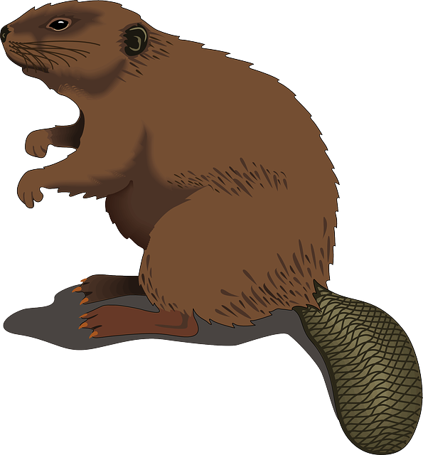 Beaver, Wood, Standing, Tail, Log