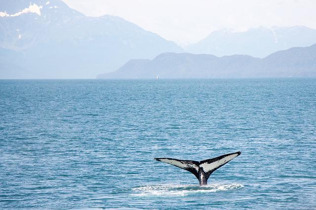 Whale, Tail, Alaska, Cruise, Ocean, Water, Wildlife