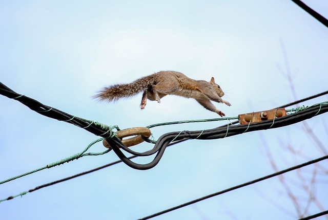 Sky, Nature, Tail, Squirrel, Wildlife
