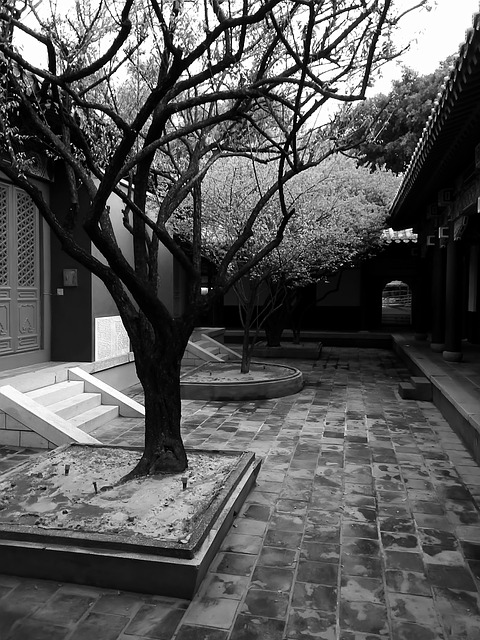 Black And White, Trees, Taiwan, Historical Sites