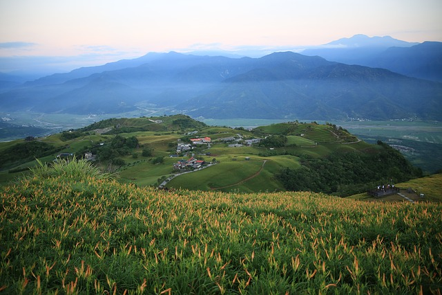 Taiwan, Little Switzerland, Flower, Sea Of Flowers