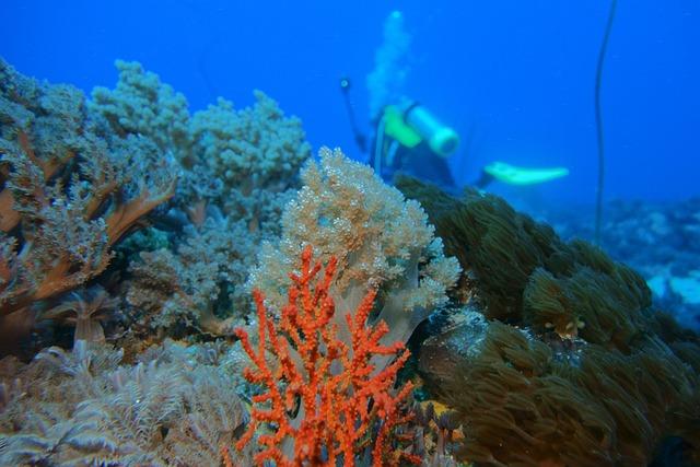 Underwater, Reefs, Green Island, Taiwan, Taitung