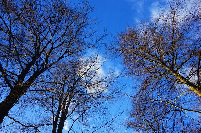 Tree, Tree Top, Branch, Bare Branch, Tangle