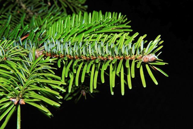 Tannenzweig, Needles, Green, Fir, Branch, Periwinkle