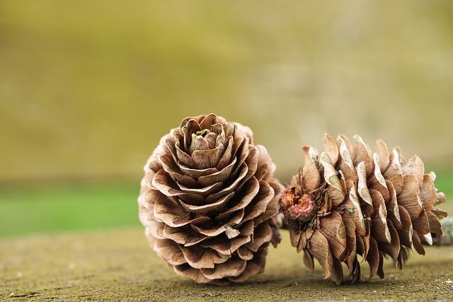 Tap, Pine Cones, Nature, Brown, Seeds, Wood, Close