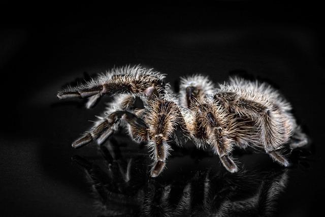 Tarantula, Arachnophobisch, Spider, Hairy, Creepy, Fear