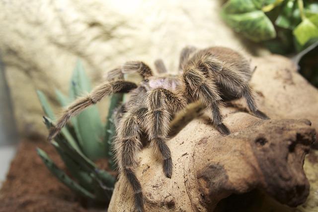 Spider, Terrarium, Tarantula, Hairy, Fear