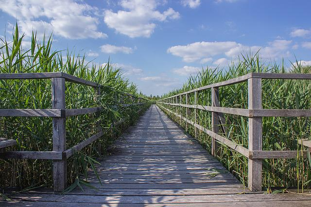 Web, Boardwalk, Reed, Target, Focus, Away, Nature, Moor