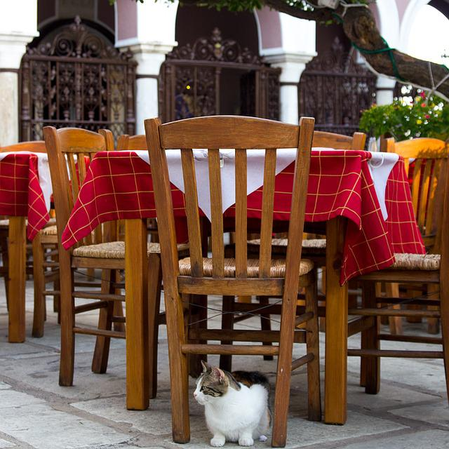 Outdoor Seating, Cat, Greece, Taverna