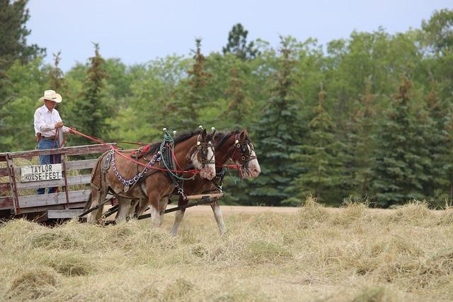 Horses, Wagon, Cart, Agriculture, North Dakota, Taylor