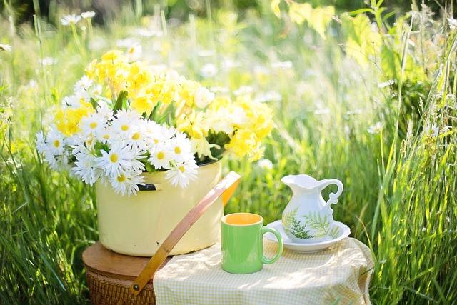 Daisies, Summer, Flowers, Nature, Green, Bloom, Tea