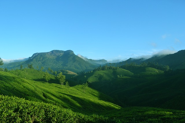 Munnar, Kerala, India, Nature, Landscape, Tea