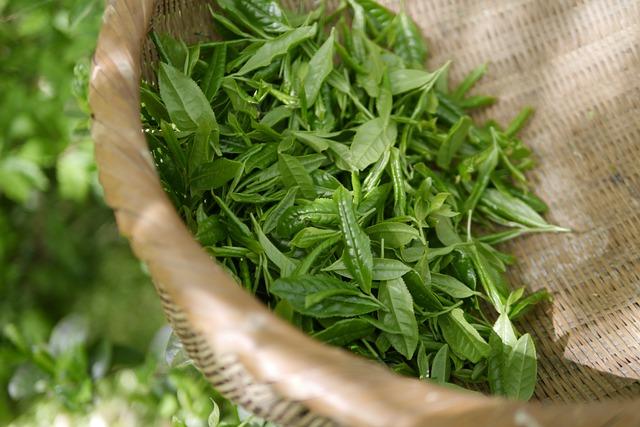Green Tea, Tea, Koreatea, Korea, Teatime
