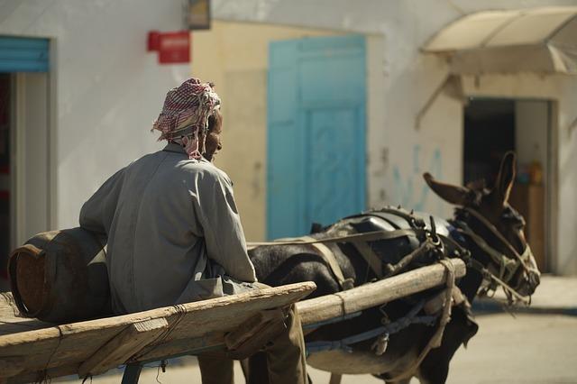 Tunisia, Man, Team, Donkey, Road, Rides, Home, Village