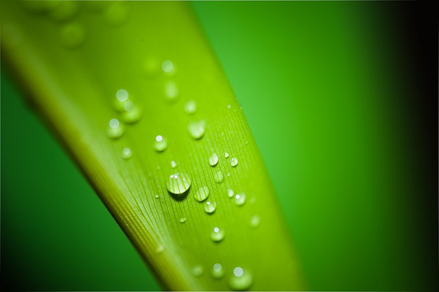Droplets, Water, Drop, Rain, Tear, Teardrop, Liquid