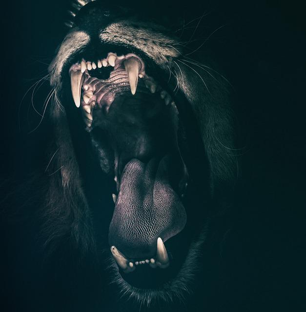 Lion, Teeth, Roar, Fear, Angry, Roaring, Strength