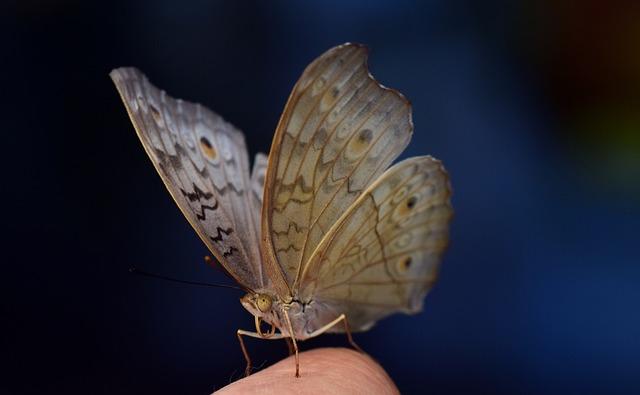 Butterfly, Wing, Tender, Finger, Butterflies, Sensitive